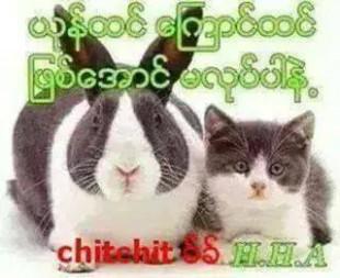 rabit cat