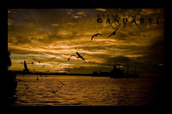 sunset & seagull