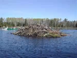beaver loge