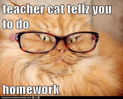 Teacher-Cat